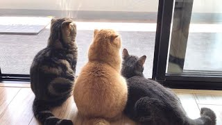 #funnyvideos #funny #animals #bird #cat    FUNNIEST/CUTEST VIDEO EVER !!!!