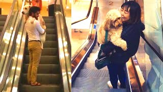 Dog Owners Carrying Their Cute Dogs On Escalators – Scared Dogs