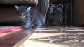 Two kittens: Cat's Crash Test