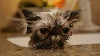 Very Funny Cats 79