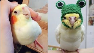 Funny Parrots Videos Compilation cute moment of the animals – Cutest Parrots #1