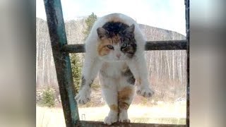 I CAN'T BREATHE! hahaha – Super FUNNY CAT compilation