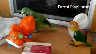 Nobody messes with Baby's friend Puffy | Cute Birds