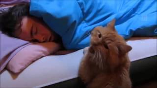 Cats Can Be Jerks – Funny Cat Compilation