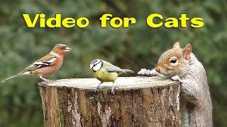 Videos for Cats and Dogs : 8 Hours of Birds and Squirrel Fun ✅