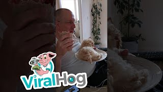 Excited Puppy Climbs on Plate || ViralHog