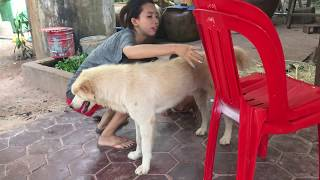 LOVELY SMART GIRL PLAYING BABY CUTE DOGS AT HOME HOW TO PLAY WITH DOG & FEED BABY DOGS #15