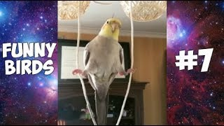 Cute and Funny BIRDS Compilation #7