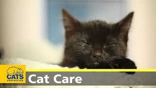Kitten care part two: kittens at home