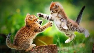 Funny Cats 🐱😂 Playful and Cute Cats (Full) [Funny Pets]