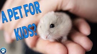 Hamsters a PERFECT Pet For Kids? | Myths & Misconceptions – Episode Seven | JohnsAnimals