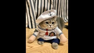 Cute Cats in Costume [Compilation 2019] Like on Catwalk