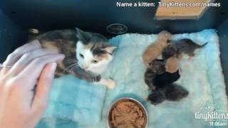 Tiny Kittens Shellys morning visit w Starling & kittens