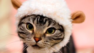 Cute Cats wearing Clothes #60