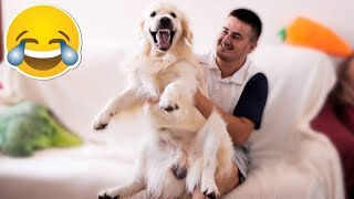 Funny Dog Reaction to Me When I Feel Happy