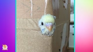 🤣 Cute Parrots Doing Funny Things #2 – 😍 Cutest Parrots In The World 2018