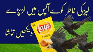 Crows amazing fight for Lays | Amazing facts | Funny videos