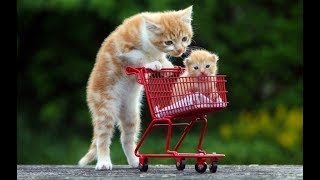 Pet Cute Animals – Top 20 Cute Dogs and Cats Doing Funny Things with thier Kids Compilation 2017