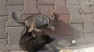 funny cats playing fiercely