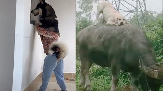 Cute Dogs And Puppies Doing Funny Things – Cutest Dogs In The World   Puppies TV