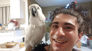 Yay Early Bird Live Stream-my Funny Birds Joseph And Tiago