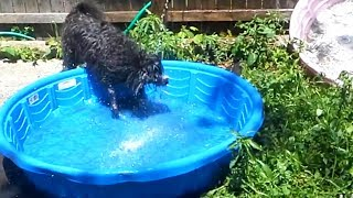 Funny Dogs Likes the Water 💦🐶  (Part 1) [Funny Pets]