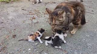 Baby kittens meowing very loudly for mom cat