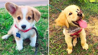 ♥Cute Puppies Doing Funny Things 2019♥ #28  Cutest Dogs | Cutest Puppies City