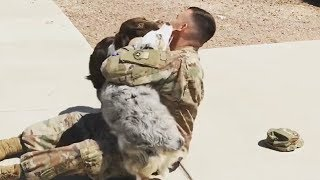 Ecstatic Dogs Welcome Home Their Owners After Being Away | Funny Dogs 2019