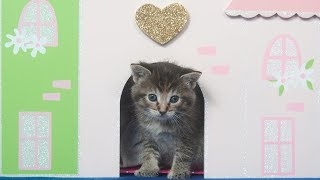 Funny Cats Play In Doll House – Funny Kittens Love Doll Houses Compilation (2018)