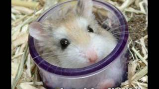 Funny and Cute Hamsters