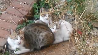 Mommy cat carefully to watching around her kittens for safety – Cute cats – Cutest kittens