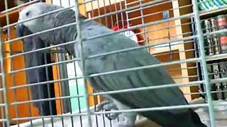 Talking Parrot 🐦Cute Bird Talking and Singing (Part 1) [Funny Pets]