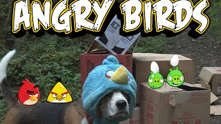 Angry Birds in Real Life with Funny Dogs | Charlie the Dog
