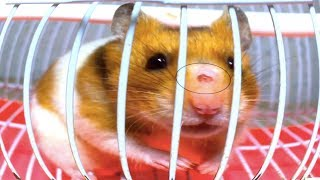 How To Make  A New House For Hamsters Hamster Kana DIY Hamster