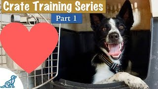 Crate Training A Puppy (So They LOVE Their Crate) – Professional Dog Training Tips