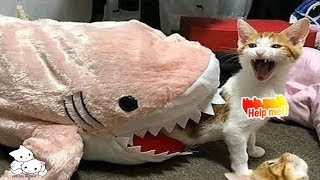 😇Funny Cats 💙 Funny and Cute🐱 Cats Video Compilation #45