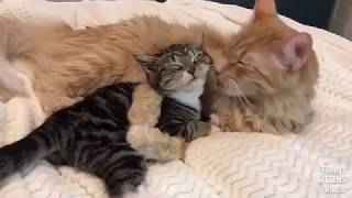 The best of videos funny cats compilations 2017 #10