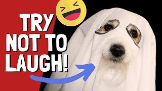 Try not to laugh cats dogs 2019 | #9 CUTE CATS & DOGS IN HALLOWEEN COSTUMES – Viral animal videos