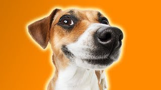 100 CUTE DOGS TO MAKE YOU HAPPY | FUNNY DOG VIDEOS