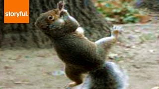 Funny Squirrel Swings Around On Bird Feeder  (Storyful, Wild Animals)