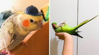Cute Parrots Doing Funny Things #5 🦜 Funny Parrots and Cute Birds Compilation | Funny Cute Animals