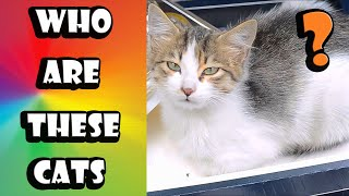 Cute Kittens and Cute Cats – Adorable Cats