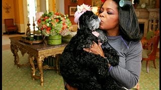 Oprah Special on Puppy Mills – MUST SEE!