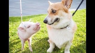 Cutest Puppies – Funny Dog Moments Try Not To Laugh | Cute Baby Dogs Funny Videos | Puppies TV