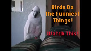 Funny Birds – Funny Birds Doing Funny Things