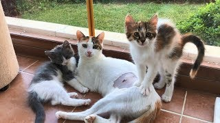 The Limping Mother Cat and Her 5 Kittens (Happy Ending!)
