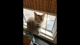 😍😃Funny cats learn how to close window and cute cats eat vegetable,Cats and Dogs Life