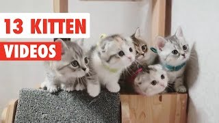 13 Funny Kittens | Funny Cat Video Compilation 2017