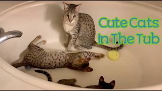 Cute Cats In The Tub/Cute Cat Video